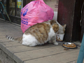 Cats of Houtong, #8607