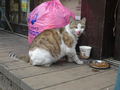 Cats of Houtong, #8608