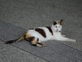 Cats of Houtong, #8672
