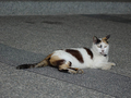 Cats of Houtong, #8674