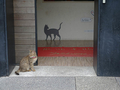 Cats of Houtong, #8683