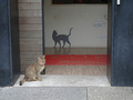 Cats of Houtong, #8684