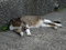 Cats of Houtong, #8695