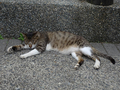 Cats of Houtong, #8698