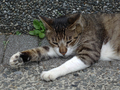 Cats of Houtong, #8699
