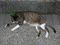 Cats of Houtong, #8700