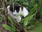 Cats of Houtong, #8702