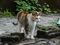 Cats of Houtong, #8704