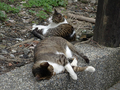 Cats of Houtong, #8727