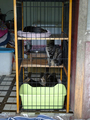 Cats of Houtong, #8750