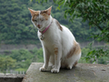 Cats of Houtong, #8756