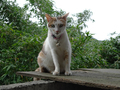 Cats of Houtong, #8759