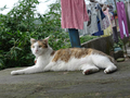 Cats of Houtong, #8760