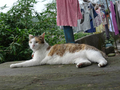 Cats of Houtong, #8761