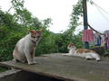 Cats of Houtong, #8763