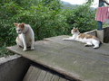 Cats of Houtong, #8764