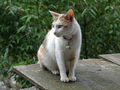 Cats of Houtong, #8766