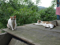 Cats of Houtong, #8769