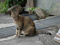 Cats of Houtong, #8770