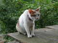 Cats of Houtong, #8772