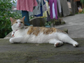 Cats of Houtong, #8773
