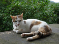 Cats of Houtong, #8776