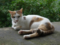 Cats of Houtong, #8777