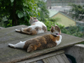 Cats of Houtong, #8780