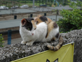 Cats of Houtong, #8838