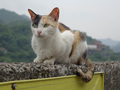 Cats of Houtong, #8840