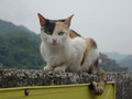 Cats of Houtong, #8842