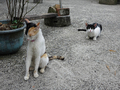 Cats of Houtong, #8854