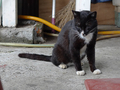 Cats of Houtong, #8872