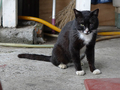 Cats of Houtong, #8873