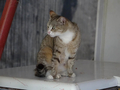 Cats of Houtong, #8882