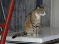 Cats of Houtong, #8884