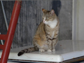 Cats of Houtong, #8885