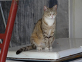 Cats of Houtong, #8888
