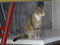 Cats of Houtong, #8889