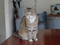 Cats of Houtong, #8890