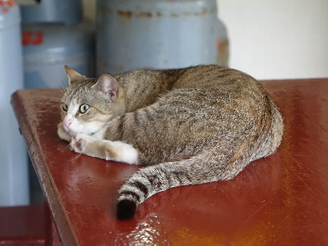Cats of Houtong, #8891