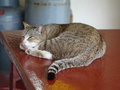 Cats of Houtong, #8893