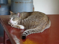 Cats of Houtong, #8894