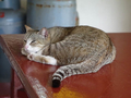 Cats of Houtong, #8895