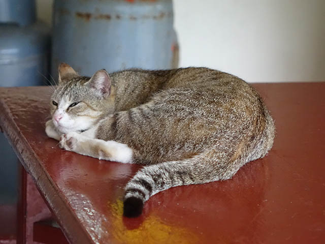 Cats of Houtong, #8896