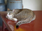 Cats of Houtong, #8897