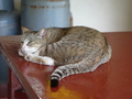 Cats of Houtong, #8898