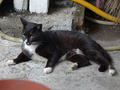 Cats of Houtong, #8899