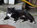 Cats of Houtong, #8900