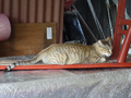 Cats of Houtong, #8901